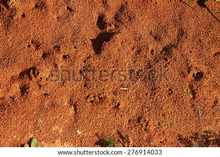 soil blackground in the nature - stock photo