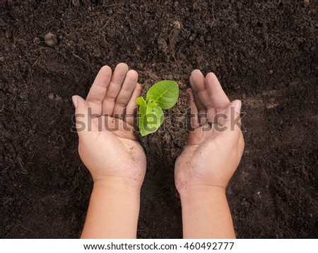 soil,Plant,Seedling,Save Plant concept,Close up male hand planting and protected over black soil - stock photo