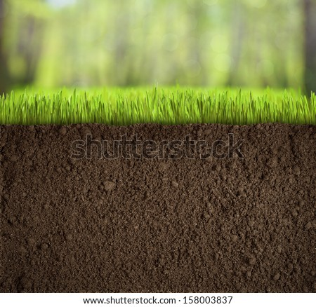 soil under grass in forest - stock photo