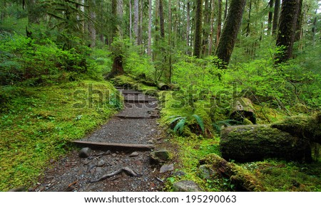 Sol Duc Falls Trail, Olympic National Park  - stock photo