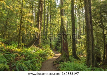 Sol Duc , Olympic National Park, USA - stock photo
