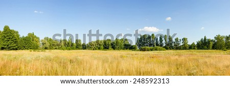 Solar field, summer grass and forest in the distance - stock photo
