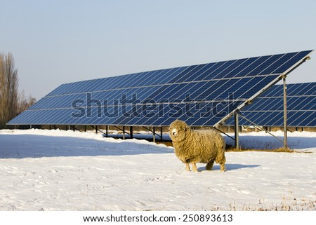 Solar panel and Sheep - stock photo