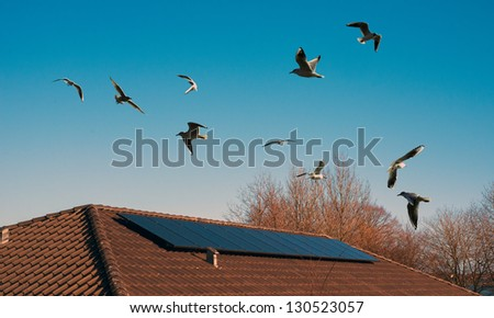 Solar roof on my house a sky blue birdie day. - stock photo