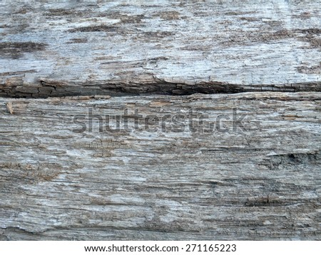solid wood oak - stock photo