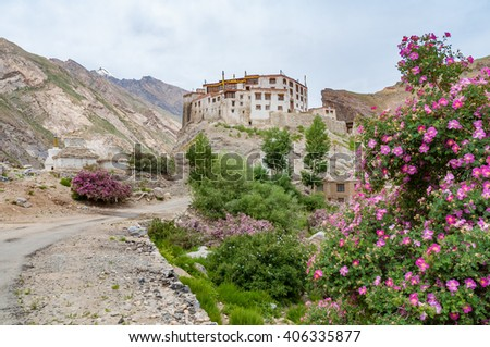 Solitary buddhist monastery, white painted building with red roof, located in rocky desert, surrounded by high mountain peaks, with few lush green rose shrubs blooming in spring, Zanskar region, India - stock photo