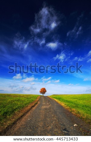Solitary orange chestnut tree during autumn. Tree in the meadow, with dark blue sky with white clouds. Road between green meadows. National park Ceske Svycarsko, Czecj republic. Beautiful landscape. - stock photo