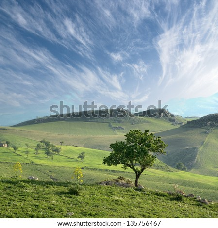 solitary tree in a green valley on sicilian hinterland hills - stock photo