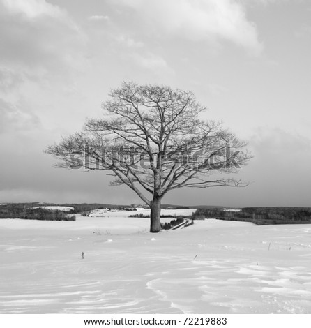 Solitary Tree in winter - stock photo