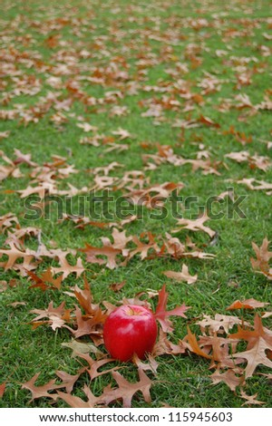Solo Apple - stock photo