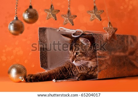 Somali cat sitting inside brilliant bag under a christmas tree. Playing with baubles - stock photo