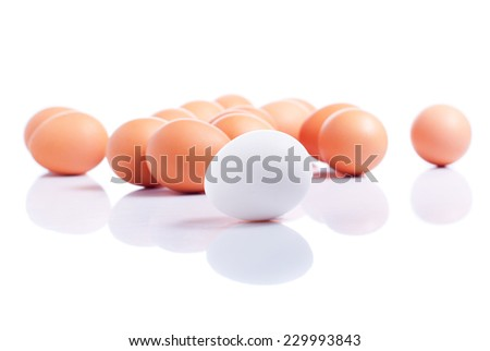some brown eggs one white egg in the foreground on a white isolated background with reflection side view - stock photo