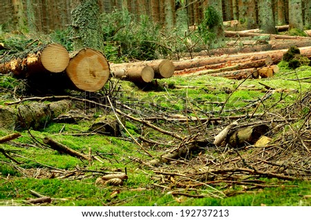 Some cut trees in the forest in summer - stock photo