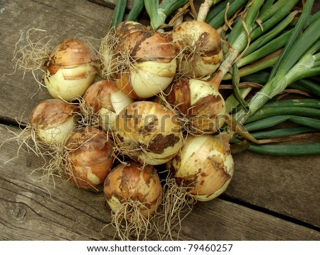 some fresh onion bulbs with tops - stock photo