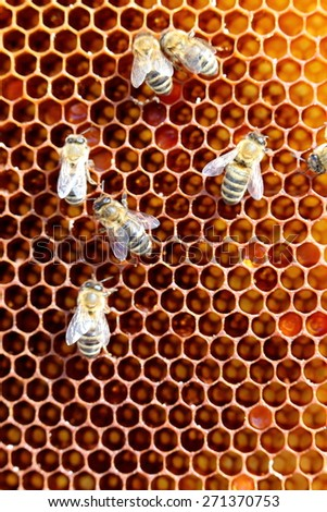 some honey bees on a hexagonal cell  - stock photo