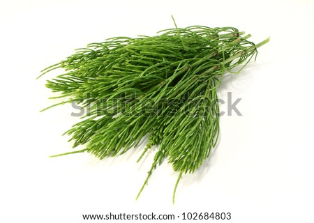 some horsetail stems on a light background - stock photo