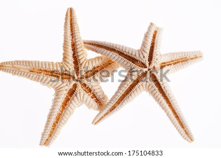 some of sea stars isolated on white background - stock photo