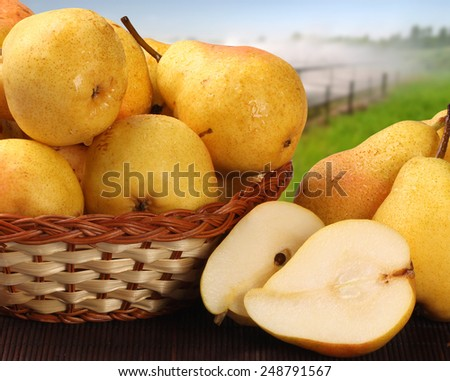 Some pears in a basket over a wooden surface on a pear field background - stock photo