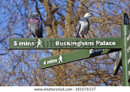 Some Pigeons on pedestrian signposts in London's St. James's Park. - stock photo