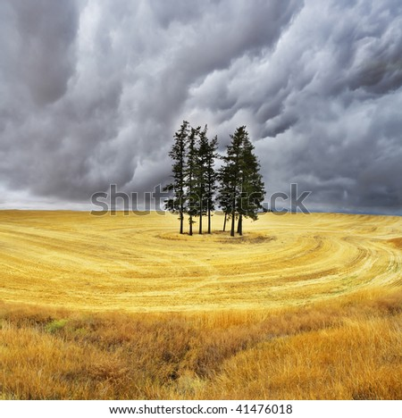 Some trees in fields after a harvest - stock photo