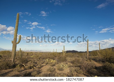 Tucson Stock Photos Images Pictures Shutterstock