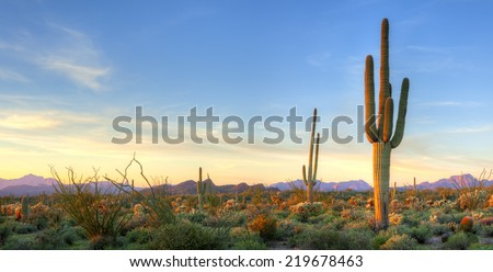 Sonoran Desert catching days last rays. - stock photo