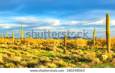 Sonoran Desert catching days last sunrays. - stock photo