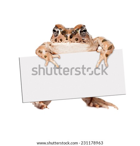 Sonoran Green Toad standing up and holding a blank sign to enter your marketing text onto - stock photo