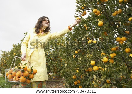 Sophisticated woman reaching for an orange from a tree while holding a supermarket shopping basket full of oranges. - stock photo