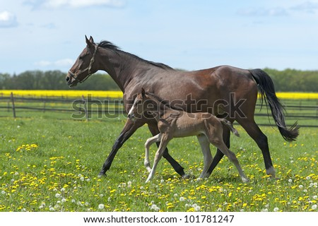 sorrel horse - stock photo