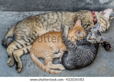 Sott focus Small kittens suckling from his mother - stock photo