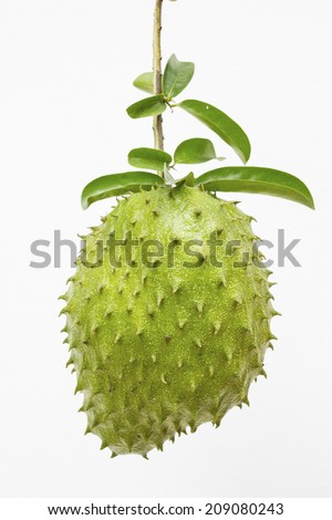 Soursop or Prickly Custard Apple or Durian belanda (Annona muricata L.) tropical fruit used for fresh juices isolated on white background - stock photo