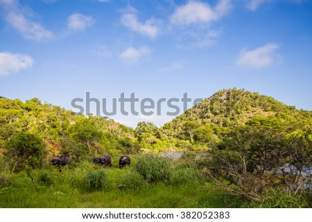 South Africa - January 15: Morning Game drive safari at Mkuze Falls Game Reserve - stock photo