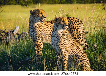 South Africa - Sabi Sand Game Reserve - stock photo