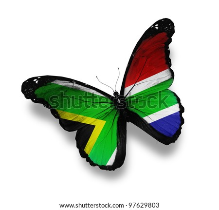 South African flag butterfly, isolated on white - stock photo
