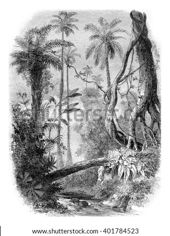 South America, vintage engraved illustration. Magasin Pittoresque 1857. - stock photo