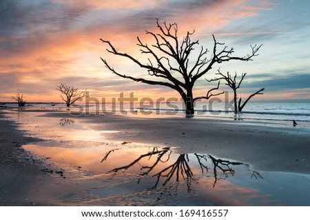 South Carolina Lowcountry Edisto Island Botany Bay Plantation Boneyard Beach Dead Tree along the Atlantic Coastline - stock photo