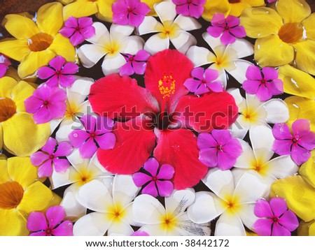 Southern country flowers - stock photo