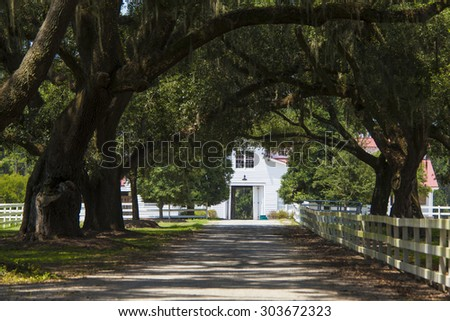southern plantation with rows of live oaks and barn in South Carolina - stock photo