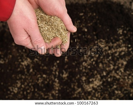 Sowing hands full of grass seeds, garden work - stock photo