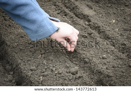 sowing the seeds of the onion - stock photo