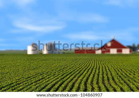 Soy bean field mid summer morning rows shallow depth with red barn - stock photo