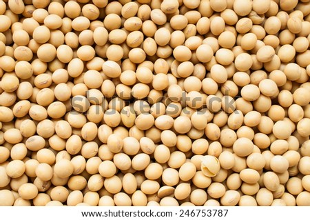 Soy pods - stock photo