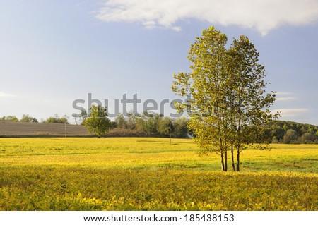 Soybean Field in Warm Morning Light - stock photo