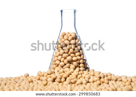 Soybean genetically modified, Plant Cell, laboratory - stock photo