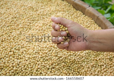 Soybean seed is ready to expand into the Federation or the production or processing. - stock photo