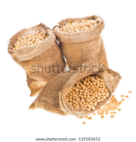 soybeans - three open their canvas bag soybeans isolated on white background - stock photo