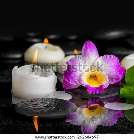 spa background of purple orchid dendrobium and candles on black zen stones in reflection water, closeup   - stock photo