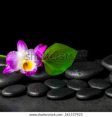 spa background of purple orchid dendrobium and green leaf Calla lily with drops on black zen stones, closeup  - stock photo