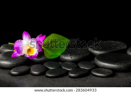 spa background of purple orchid dendrobium and green leaf Calla lily with drops on black zen stones - stock photo